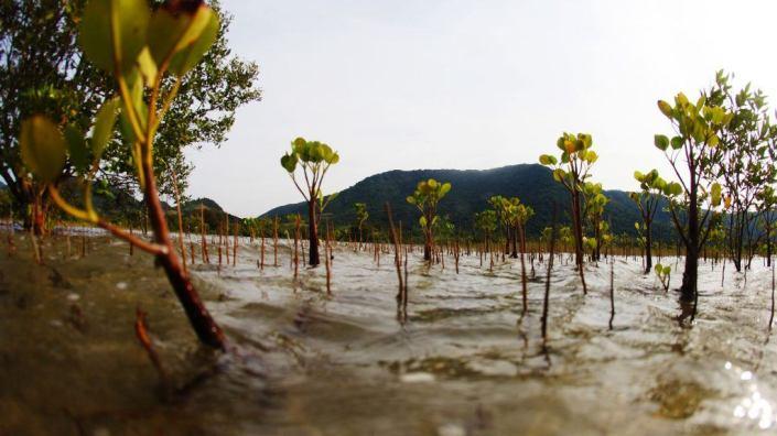 tstarboard-blue-mangroves-thor-heyerdahl-climate-park-slider-Header-1024x576